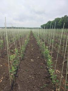 Опоры и колышки из композитных материалов для растений POLYARM от производителя - Изображение #5, Объявление #1709263