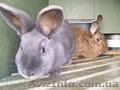 Кролиководство по экологической технологии