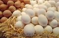 Яйцо куриное,  С1,  белое и коричневое